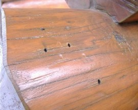 Log homes can have problems with wood boring insects