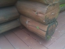 What Can You Do About Mold on Log Homes?