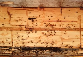Log home maintenance – The insight on insects