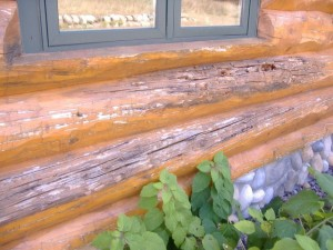 Dry Rot In Log Home