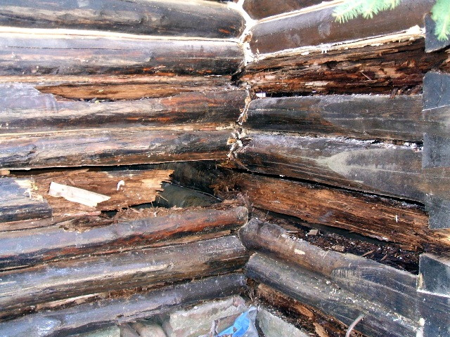 Rotten logs on a log home that need replacing.