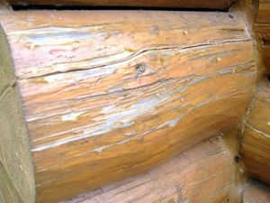 A combination of upward facing cracks and a finish build up that leg this log to rot.