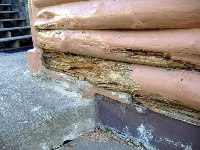 Log home restoration faq l wi mn edmunds and company - Chp call log paint ...