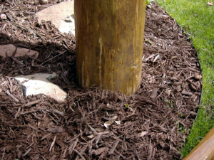 Though this mulch may look nice, it holds moisture up against the log and can contribute to the log rotting.