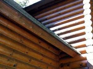 Roof of a log home that is starting to rot.