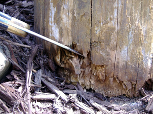 Rot on the bottom of a post that was touching the ground.