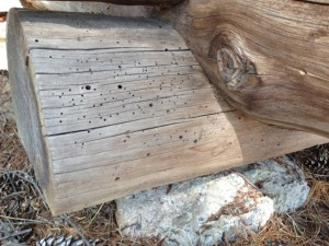 Log cabin logs with insect holes