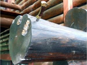 mushrooms on ends of logs