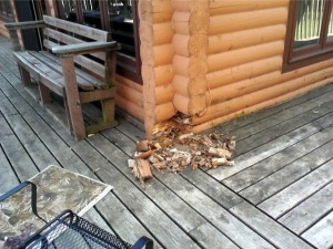 rot on lower logs along a deck