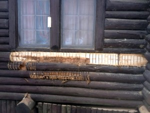 Cutting out rot under window