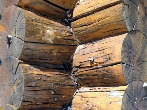 Logs with dry rot