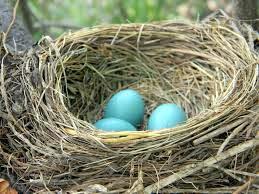 robyn nest