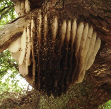 Honeybee Nest