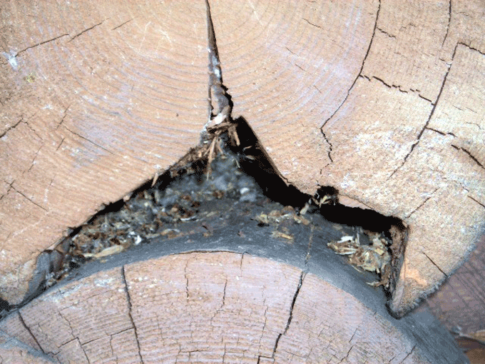logs with mice