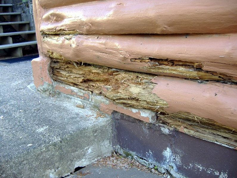 Paint buildup issues on logs cause rot