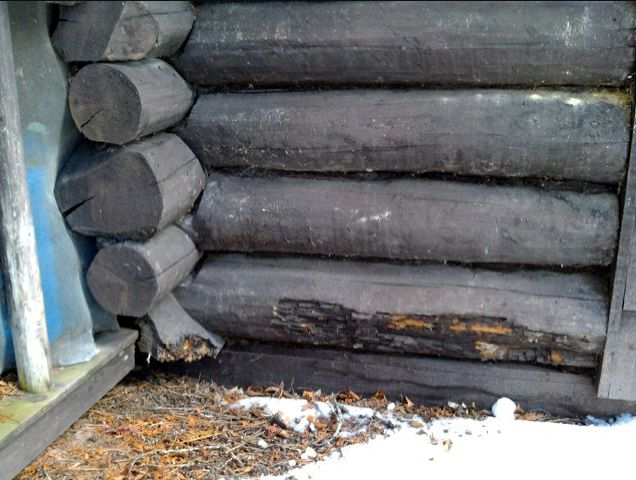 Logs with rot damage