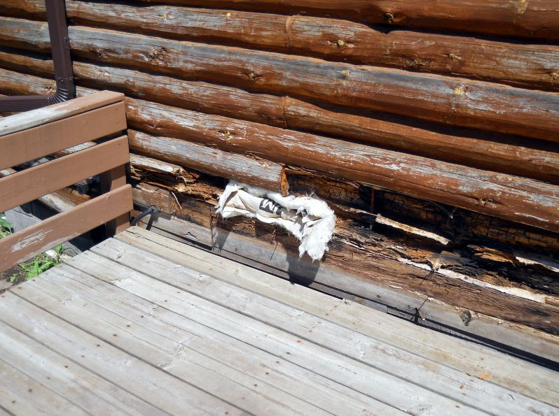 Extensive log rot near deck