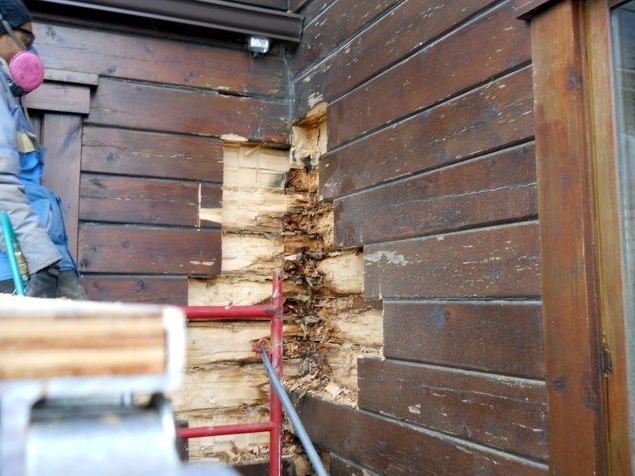 Removing rotten hewn logs