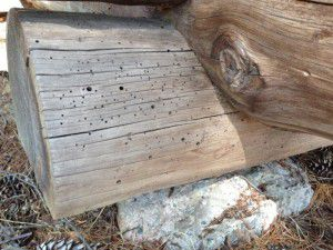 Insect holes in log